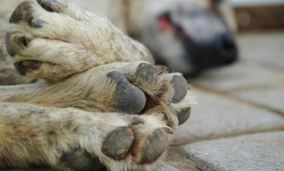 Matanza de perros en Pilar: les dieron carne envenenada